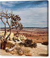 Old Desert Cypress Struggles To Survive Canvas Print