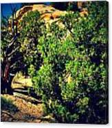 Old Desert Tree Number Two Canvas Print