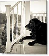 Old Dog On A Front Porch Canvas Print