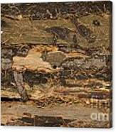 Old Forest Boards Canvas Print