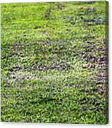 Old Green Grass Canvas Print