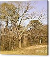 Old Haunted Tree Canvas Print