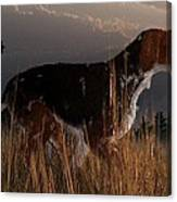 Old Hunting Dog Canvas Print