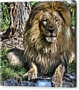 Old King Lion Canvas Print