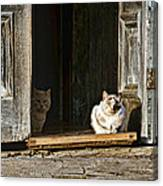 Old Knox Church Cats Canvas Print
