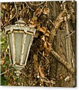 Old Lamp Hanging On Tree  Canvas Print