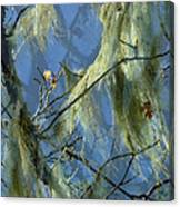 Old Man's Beard Maple Canvas Print