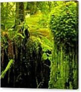 Old Mossy Stump Canvas Print