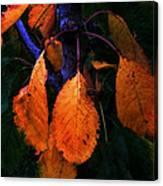 Old Orange Leaves Canvas Print