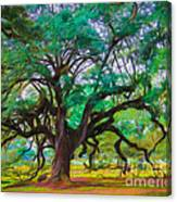 Old Plantation Oak Canvas Print