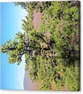 Old Rag Hiking Trail - 121225 Canvas Print