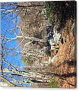 Old Rag Hiking Trail - 121246 Canvas Print