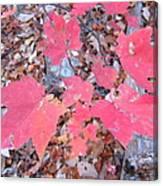 Old Rag Hiking Trail - 121261 Canvas Print