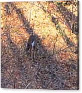 Old Rag Hiking Trail - 121265 Canvas Print