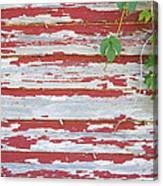 Old Red Barn With Peeling Paint And Vines Canvas Print