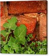 Old Red Wall Canvas Print