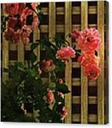 Old Roses, Old Wood Canvas Print