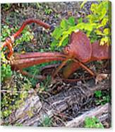 Old Rusty Bike In The Weeds 2 Canvas Print
