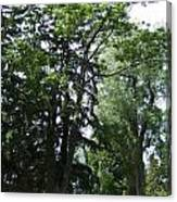 Old Section Mt Hope Cemetery Canvas Print