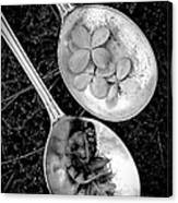 Old Silver Spoons Canvas Print