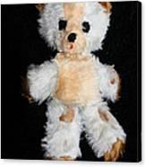 Old Teddy Bear Pepi Canvas Print