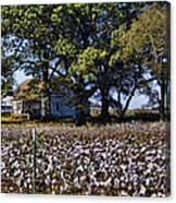 Old Time Farm And Cotton Fields Canvas Print