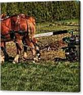 Old Time Horse Plowing Canvas Print