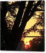 Old Tree And Sunset Canvas Print