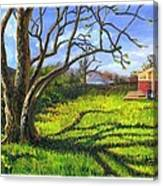 Old Tree In The Morning Of Early Spring Canvas Print