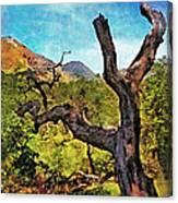 Old Tree Landscape Canvas Print