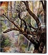 Old Tree Photoart Canvas Print