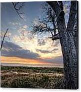 Old Tree Sunset Over Oyster Bay Canvas Print