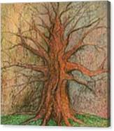 Old Tree Canvas Print