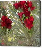 Oleander Blooms - A Touch Of Red Canvas Print