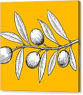 Olive Branch Engraving Style Vector Canvas Print