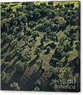 Olive Farmland In Spain Canvas Print