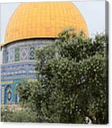 Olive Tree Dome Canvas Print