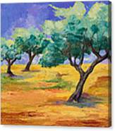 Olive Trees Grove Canvas Print