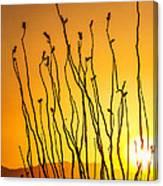 Oliver Lee Sunset Canvas Print