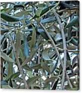Olives Canvas Print
