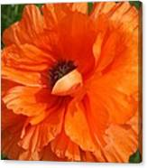 Olympia Orange Poppy Canvas Print