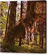 Olympic National Park - Rainforest Canvas Print