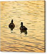 On Golden Pond Ducks Canvas Print