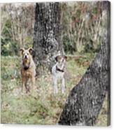 On Guard - Featured In Comfortable Art Group Canvas Print
