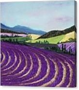 On Lavender Trail Canvas Print