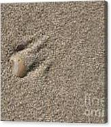 Shell On The Beach Canvas Print