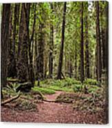 On The Enchanted Path Canvas Print