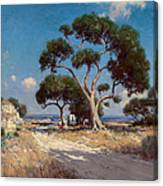 On The Old Blanco Road Southwest Texas Canvas Print