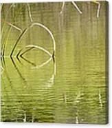 On The Pond Canvas Print