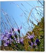 On The Prairie #3 Canvas Print